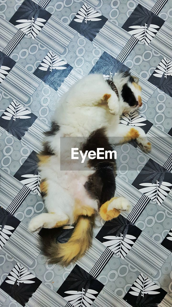domestic animals, domestic cat, pets, animal themes, one animal, feline, mammal, indoors, high angle view, no people, wireless technology, technology, keyboard, day