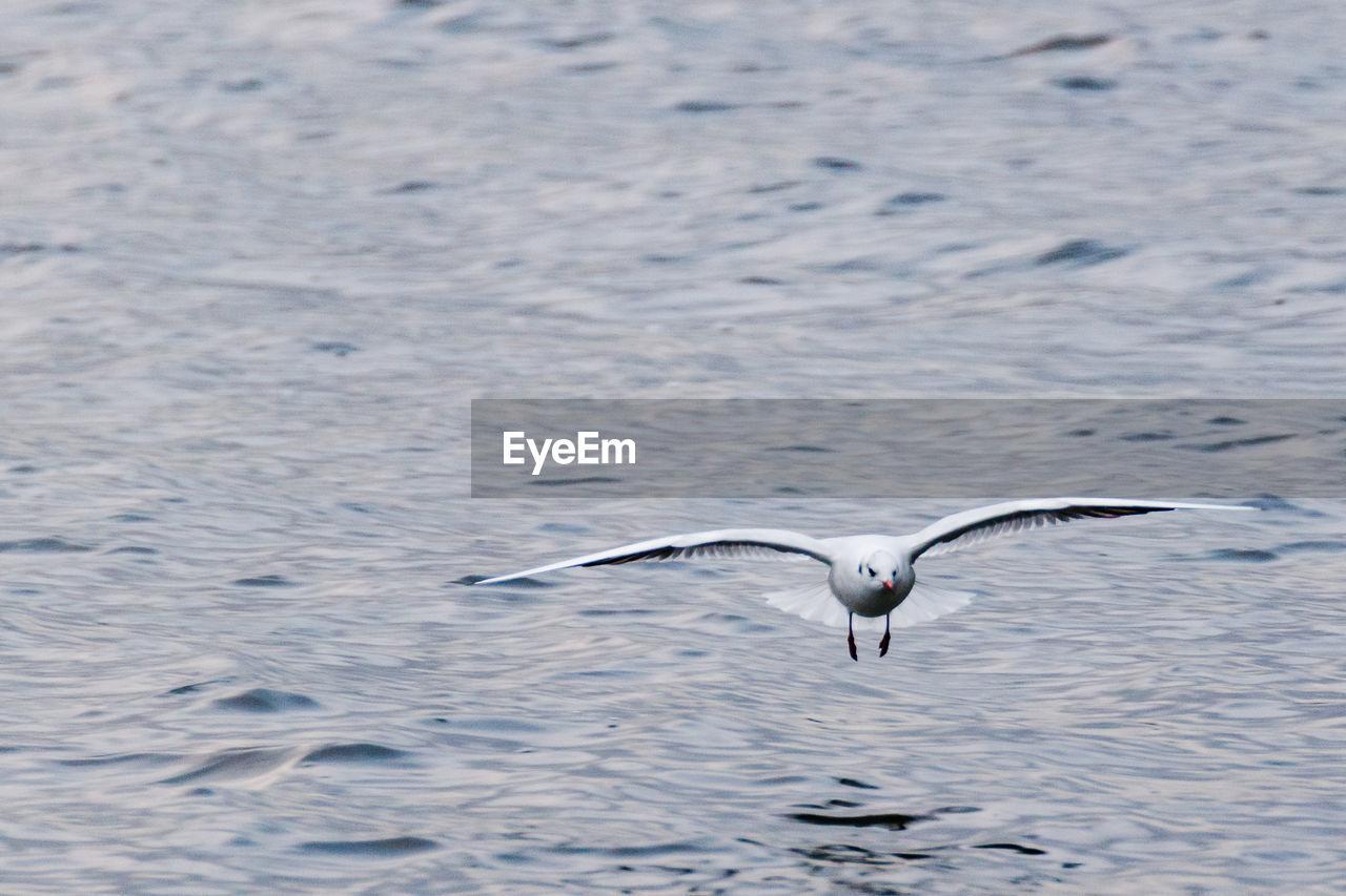 BIRD FLYING AGAINST WATER