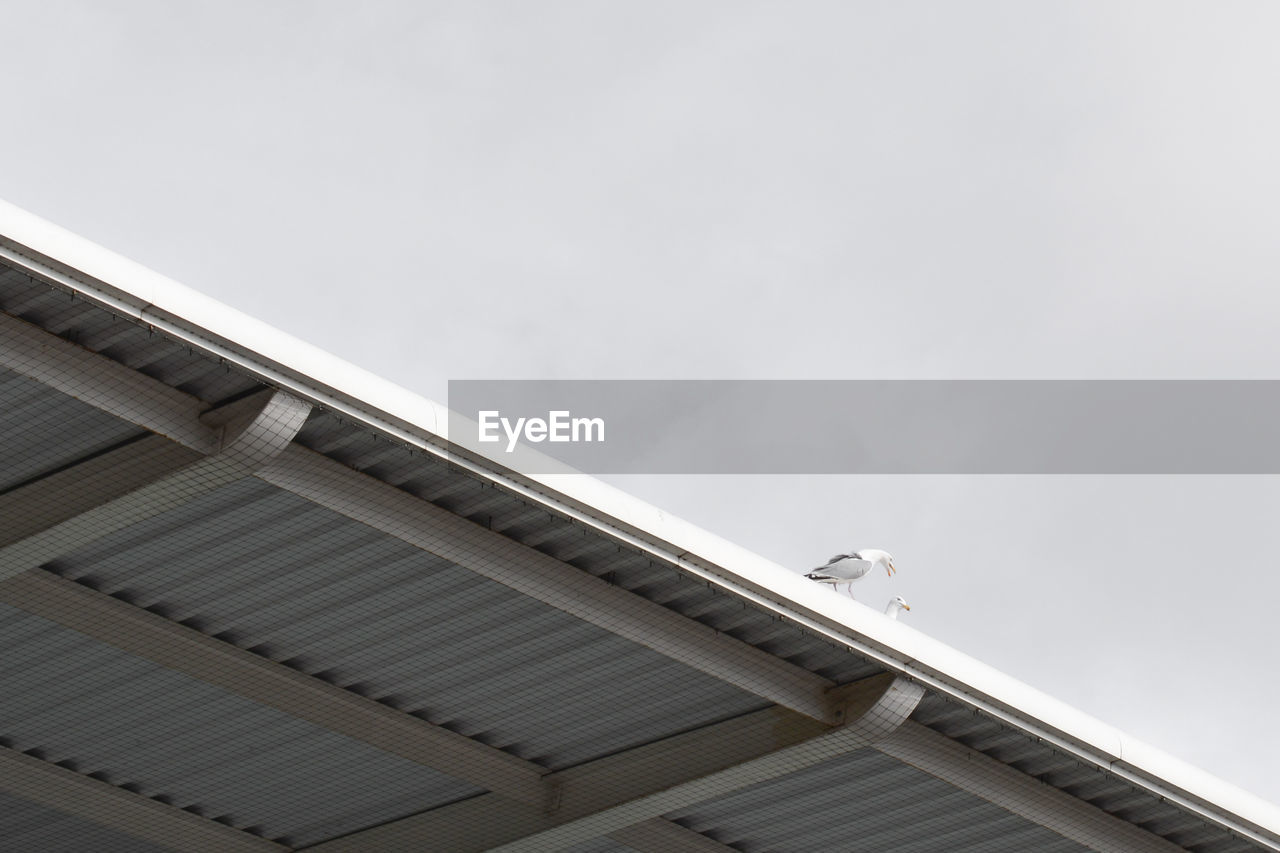 Low angle view of seagulls perching on roof against clear sky