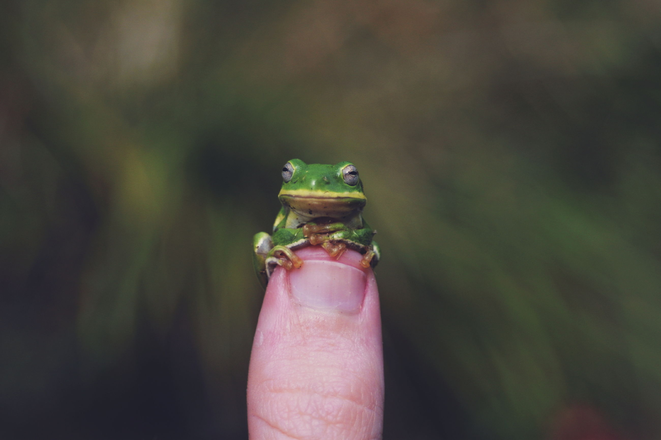 Close-up of small frog on human finger