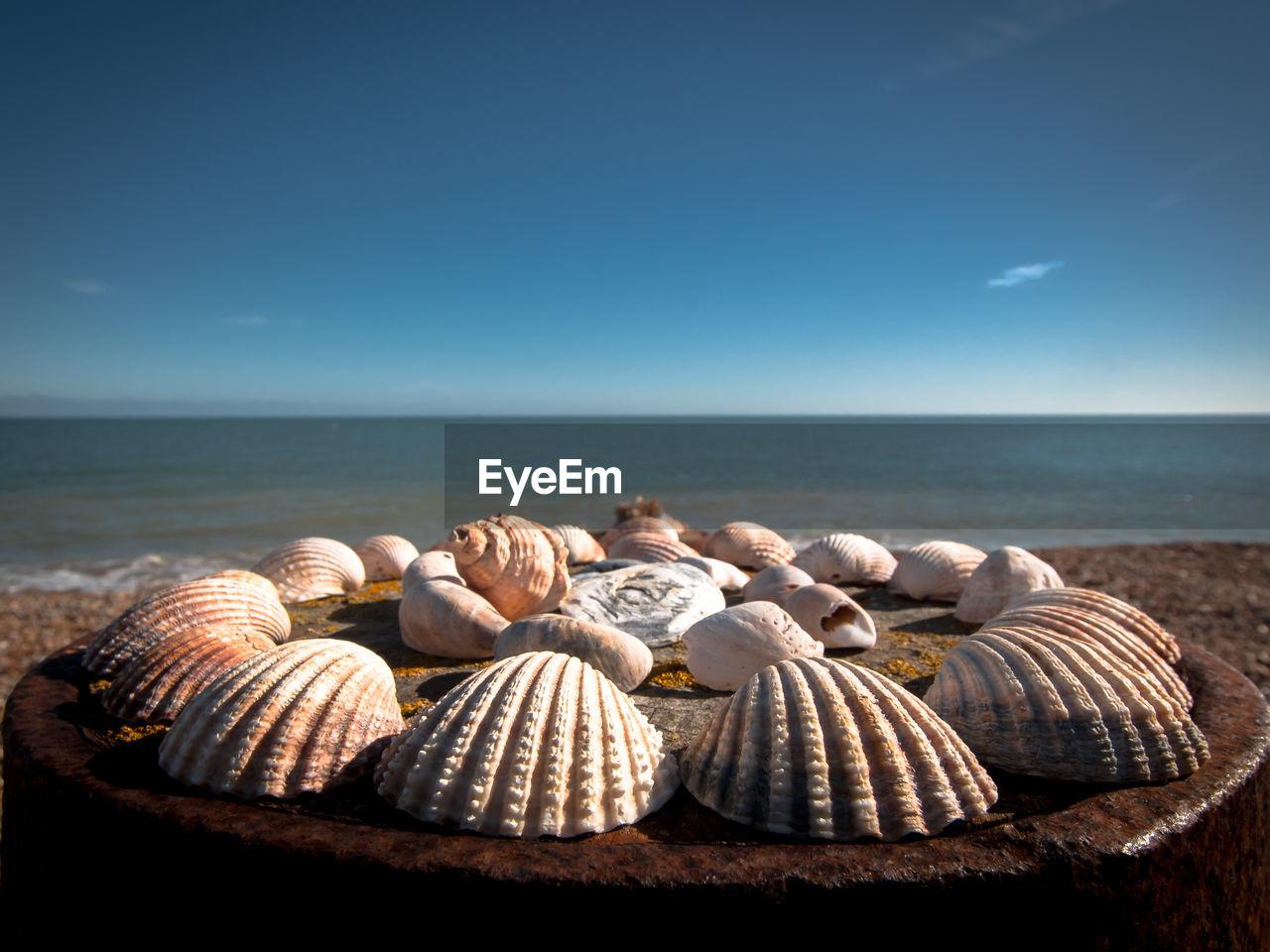 Close-up of seashells arranged on rusty metal at beach