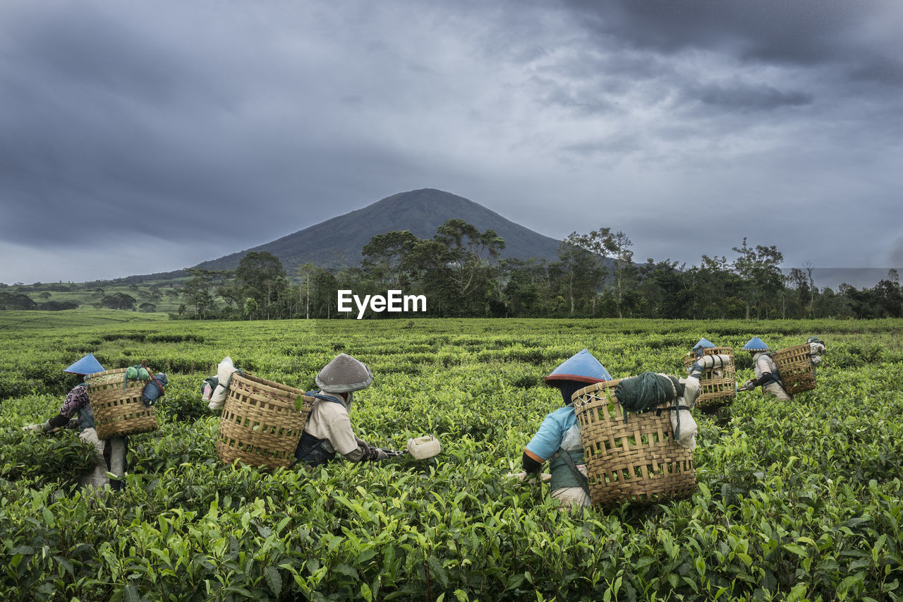 Farmers working at farm against mountains and cloudy sky