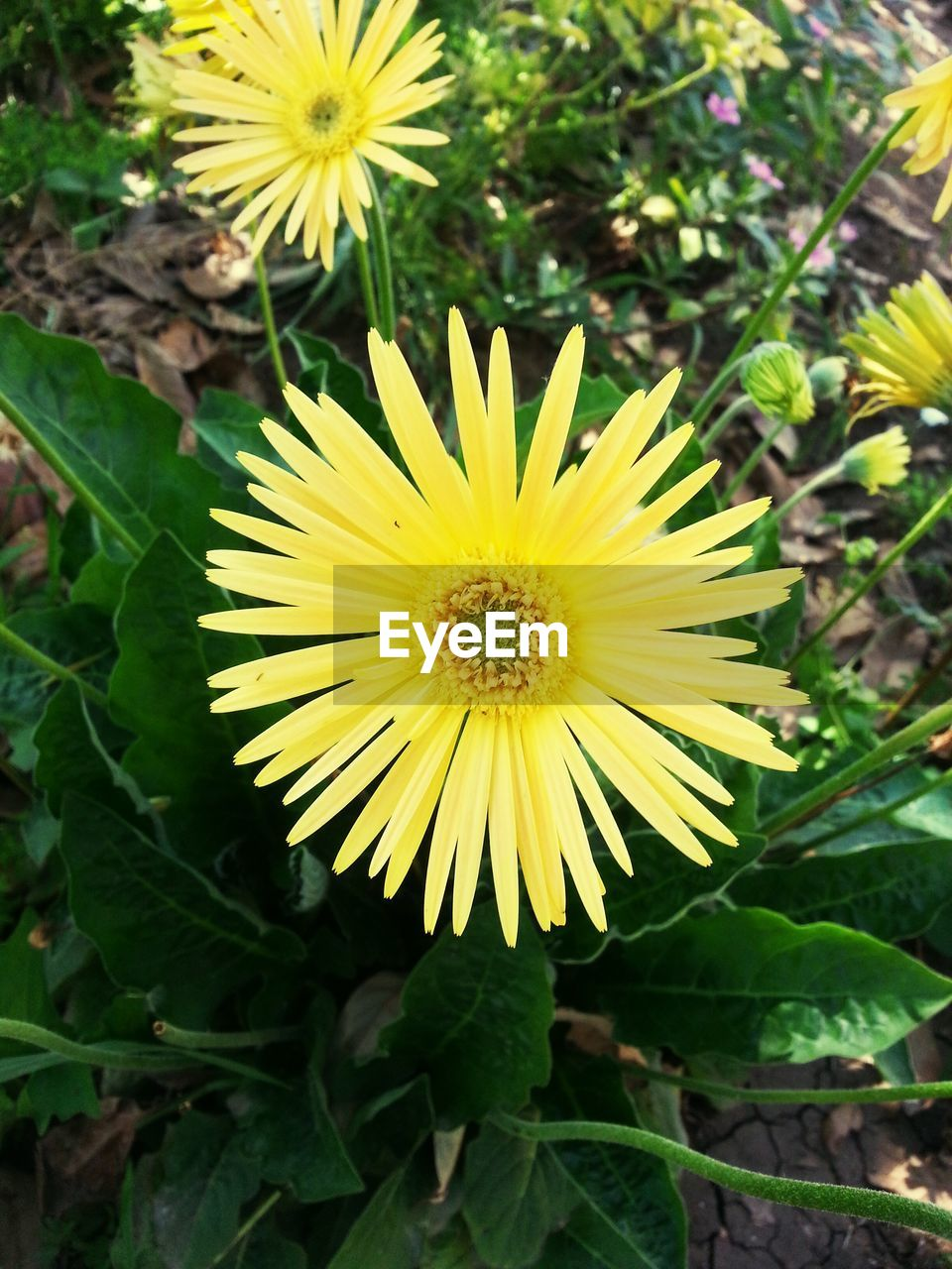 flower, yellow, fragility, nature, petal, beauty in nature, growth, freshness, flower head, plant, leaf, outdoors, no people, day, blooming, close-up