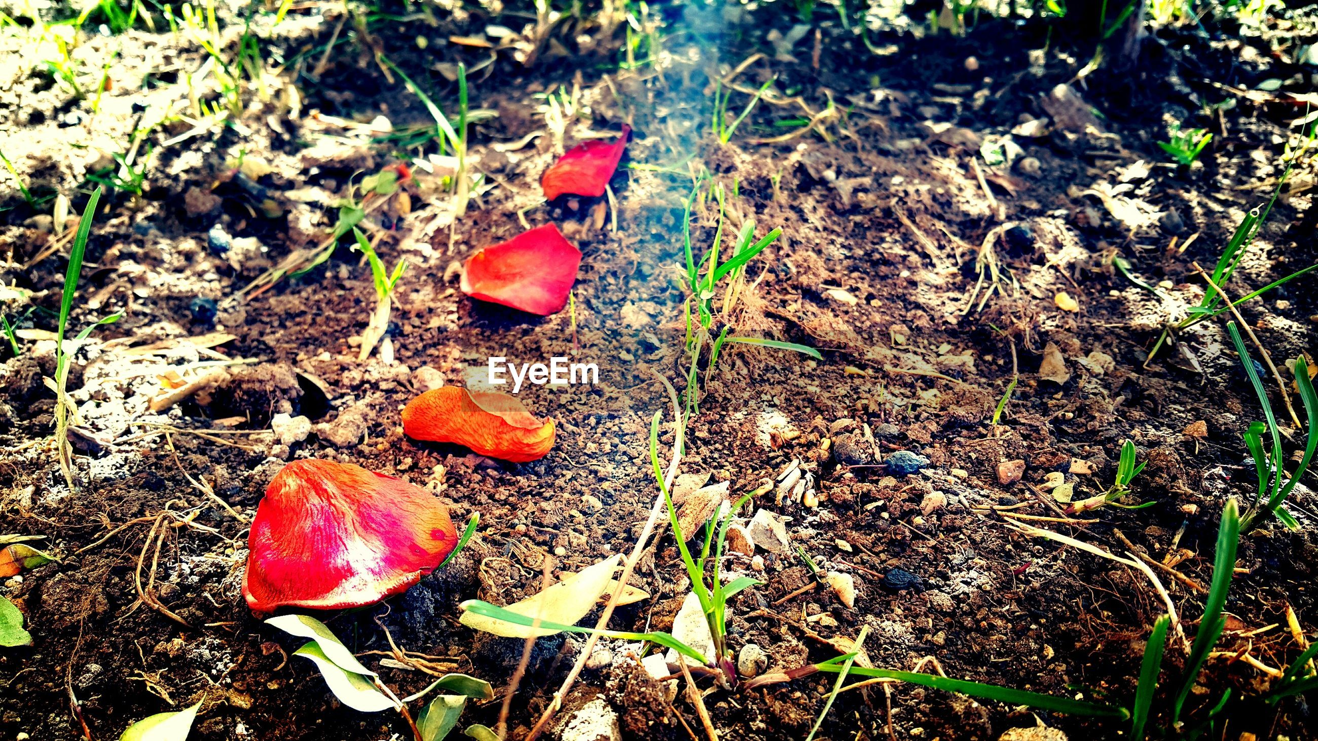 high angle view, leaf, grass, field, plant, dry, nature, red, growth, autumn, day, fallen, close-up, ground, no people, outdoors, change, fragility, dirt, stem