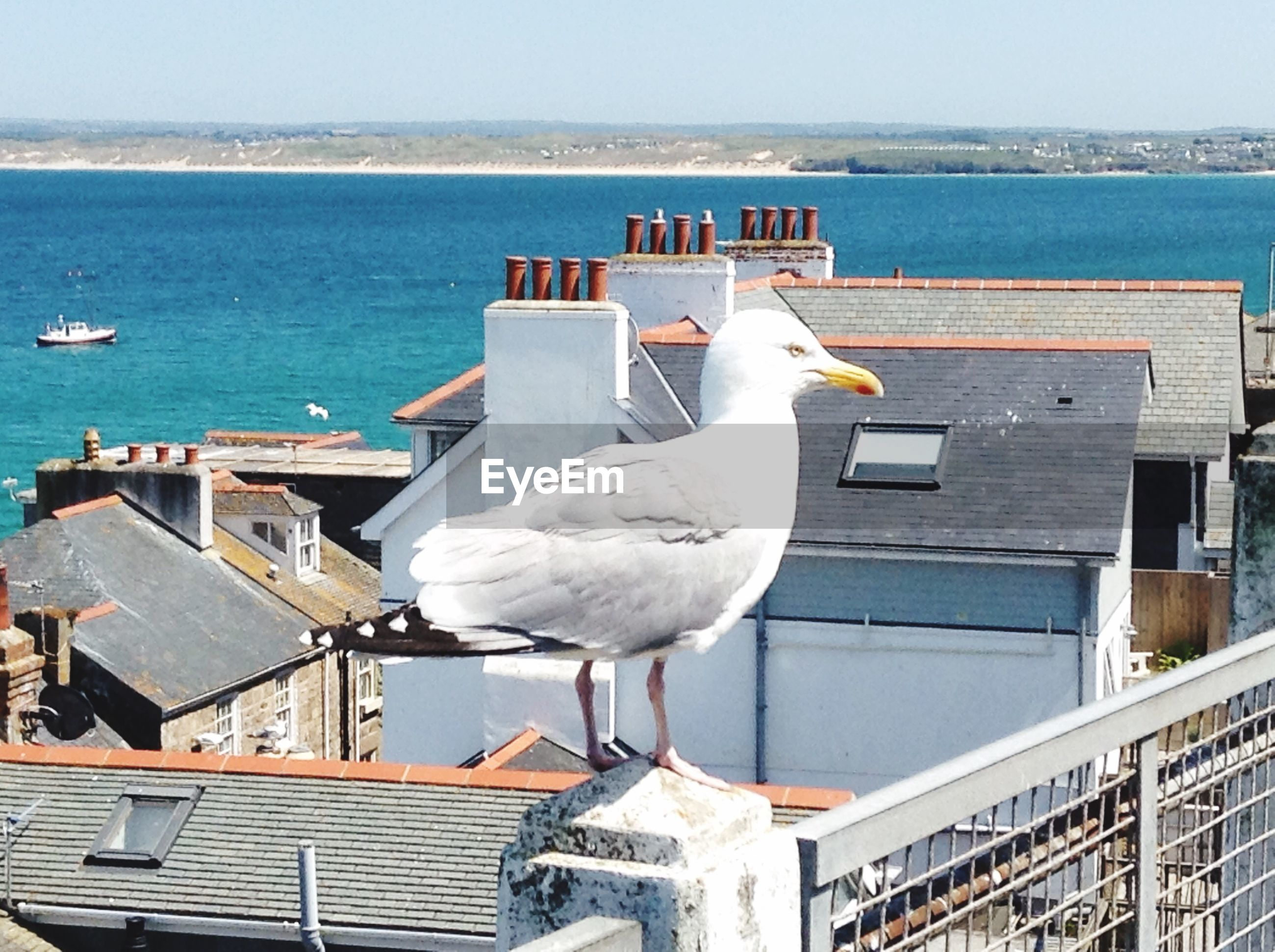 sea, water, bird, seagull, animal themes, wildlife, animals in the wild, horizon over water, perching, built structure, one animal, clear sky, architecture, building exterior, nature, railing, day, white color, nautical vessel, blue