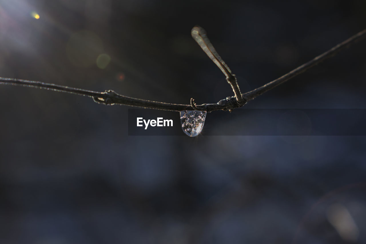 cold temperature, nature, drop, winter, focus on foreground, weather, close-up, no people, outdoors, twig, beauty in nature, frozen, water, day, fragility, snow