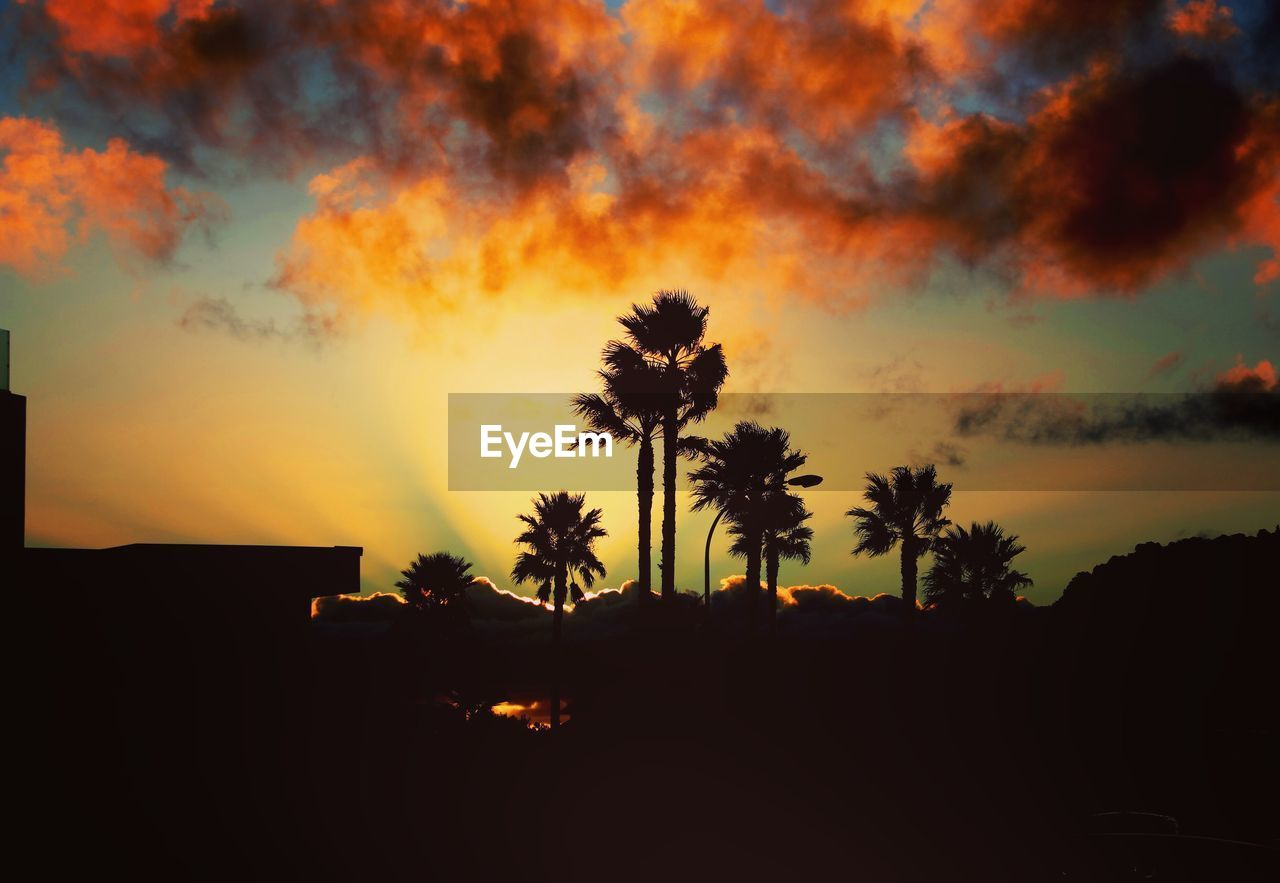 sunset, sky, silhouette, tree, cloud - sky, beauty in nature, plant, palm tree, tropical climate, orange color, scenics - nature, tranquil scene, nature, tranquility, no people, idyllic, growth, land, non-urban scene, outdoors, coconut palm tree