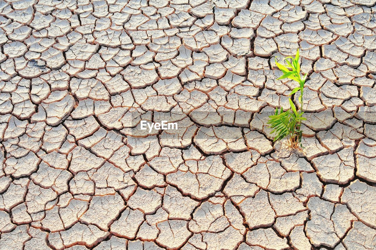 cracked, nature, drought, plant, dry, no people, day, climate, growth, plant part, leaf, arid climate, environment, textured, high angle view, dirt, full frame, pattern, land, field, outdoors, mud