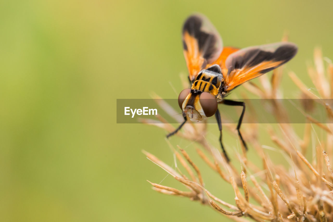 animal wildlife, insect, invertebrate, animals in the wild, animal themes, one animal, animal, close-up, beauty in nature, plant, selective focus, no people, day, nature, animal wing, growth, flower, focus on foreground, flowering plant, outdoors, pollination, butterfly - insect