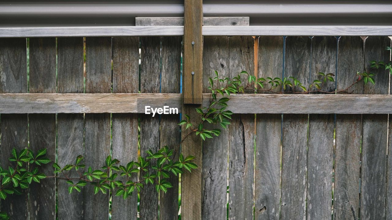 wood - material, plant, no people, leaf, plant part, day, growth, nature, green color, outdoors, architecture, built structure, barrier, boundary, close-up, fence, wall - building feature, door, wood, pattern