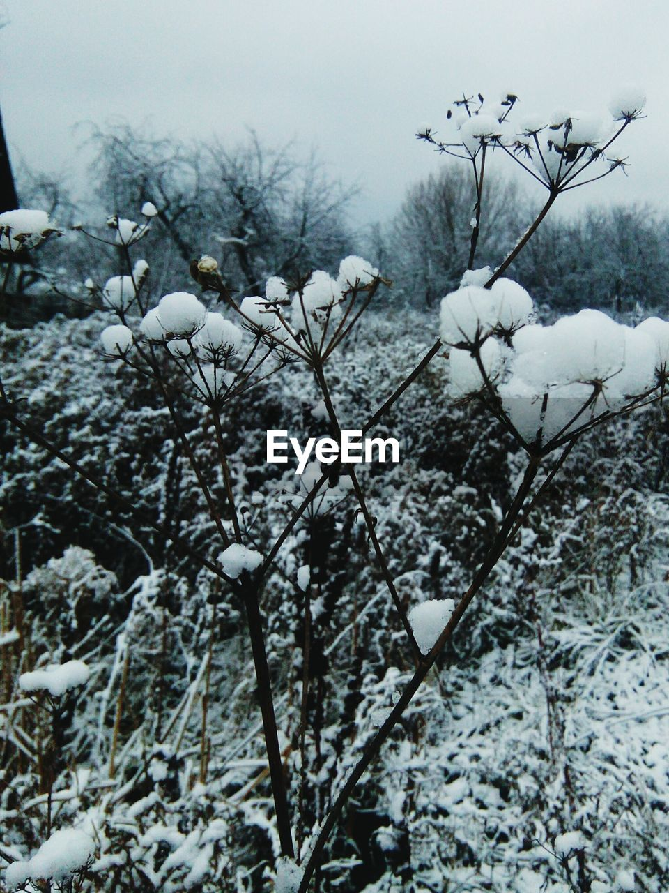winter, snow, cold temperature, nature, weather, outdoors, branch, beauty in nature, tree, day, no people, frozen, growth, fragility, flower, close-up, freshness, sky