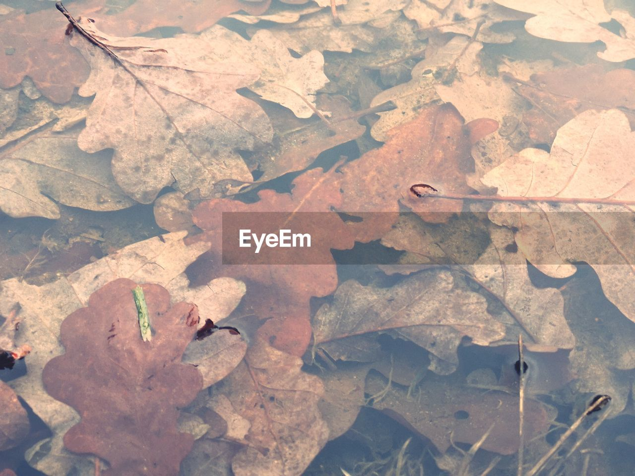 leaf, plant part, dry, autumn, leaves, change, nature, no people, day, high angle view, close-up, falling, full frame, vulnerability, fragility, outdoors, land, water, beauty in nature, maple leaf, natural condition, dried, fall