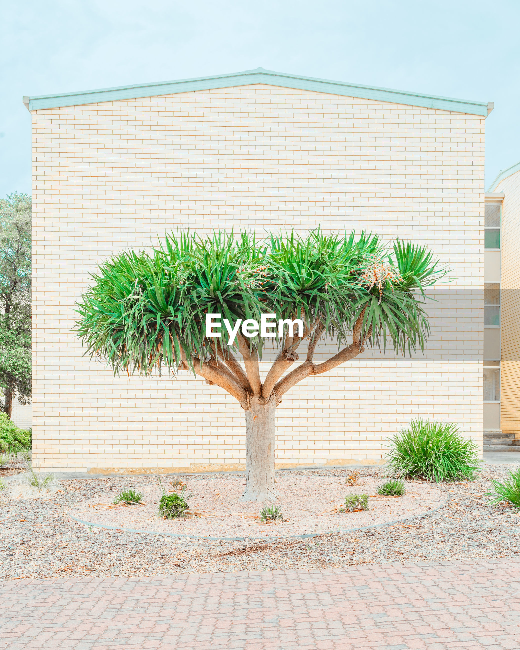 plant, nature, growth, day, no people, tree, green color, architecture, outdoors, land, built structure, building exterior, tranquility, footpath, beauty in nature, palm tree, cobblestone, wall, sky, tranquil scene, arid climate