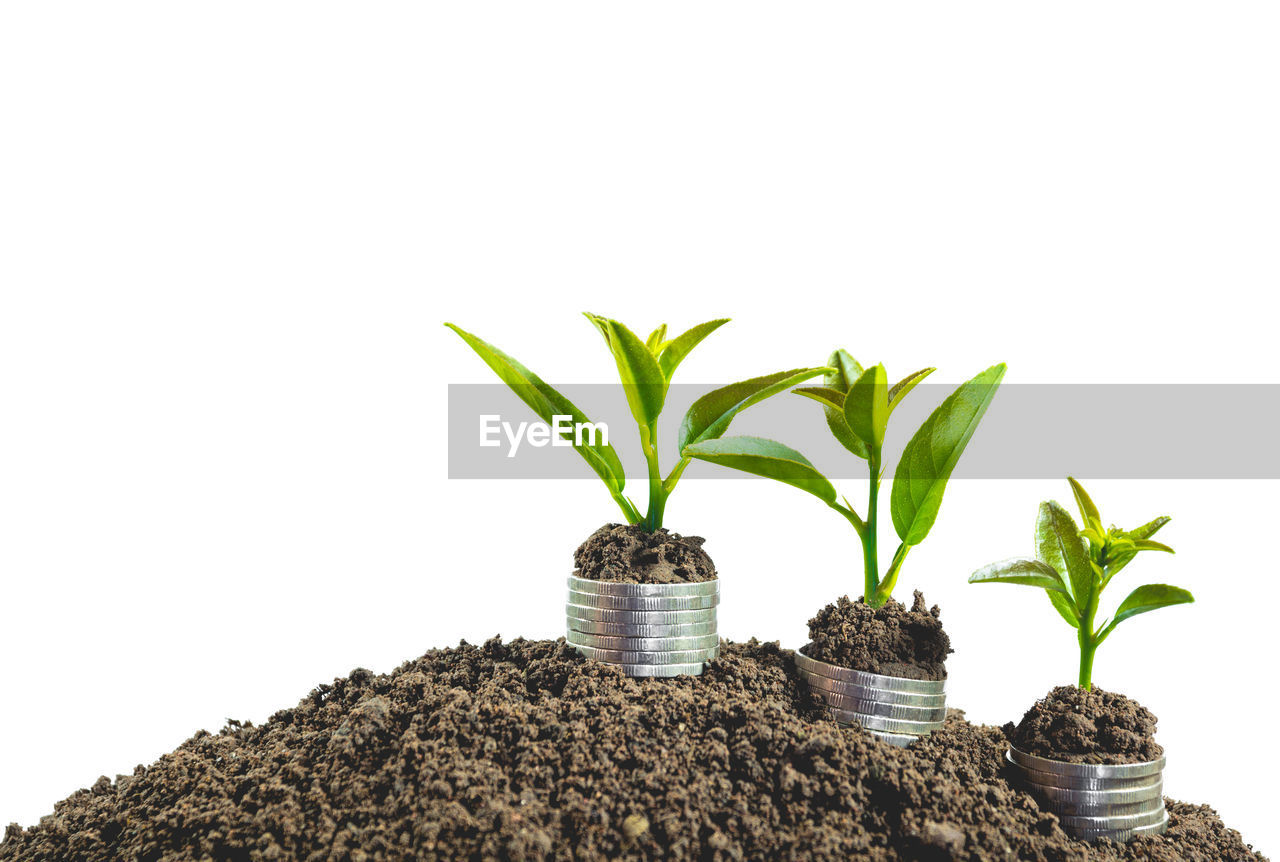 growth, potted plant, plant, plant part, leaf, no people, white background, nature, indoors, green color, copy space, close-up, studio shot, beauty in nature, botany, beginnings, new life, freshness, tree, houseplant, flower pot, gardening