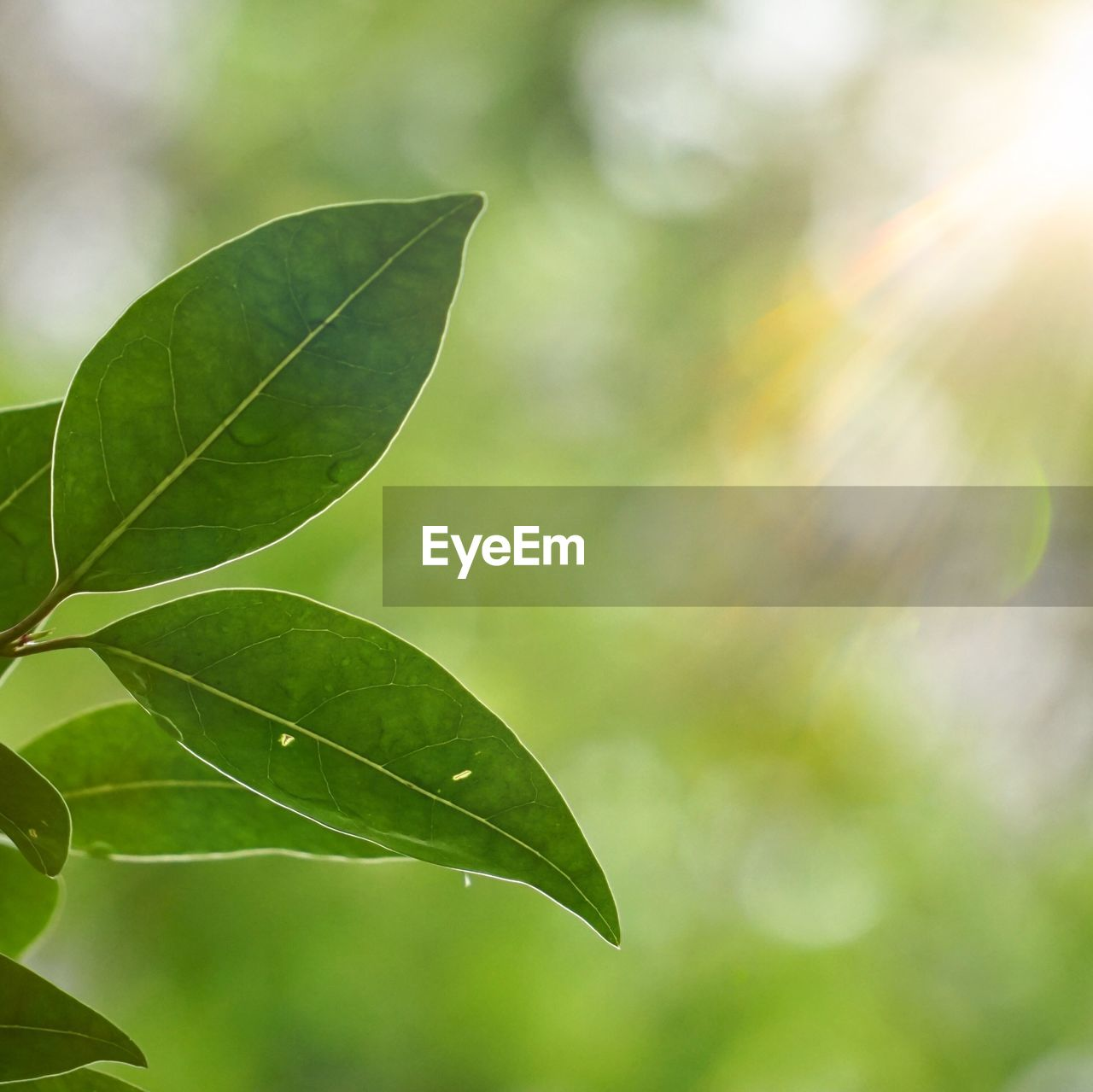 plant part, leaf, green color, close-up, plant, focus on foreground, nature, growth, beauty in nature, day, no people, outdoors, leaves, leaf vein, tree, vulnerability, fragility, sunlight, selective focus, freshness