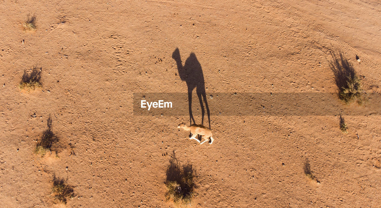 HIGH ANGLE VIEW OF A HORSE ON THE SAND