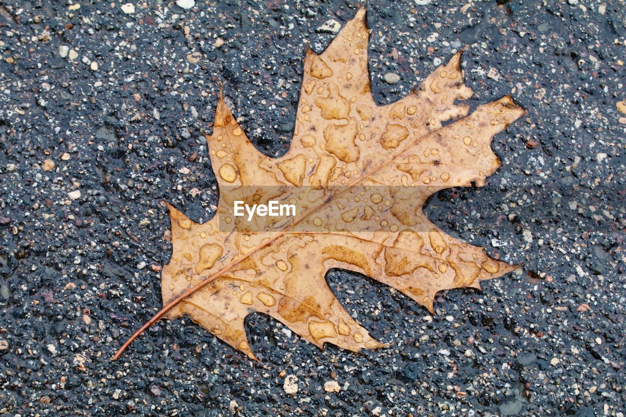 HIGH ANGLE VIEW OF A DRY LEAF ON ROAD