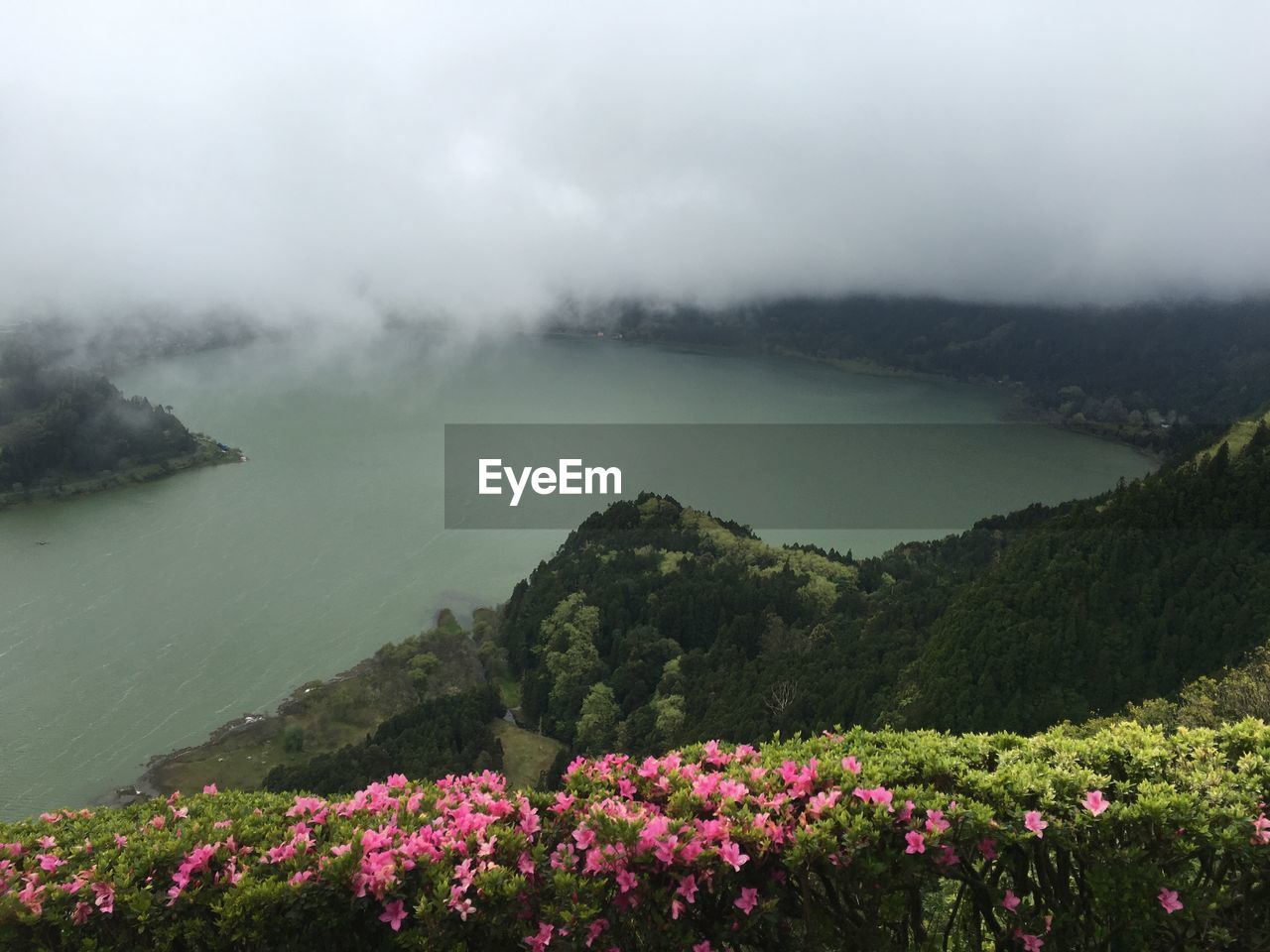 beauty in nature, nature, flower, tranquility, lake, scenics, tranquil scene, day, foggy, fog, outdoors, no people, landscape, growth, mountain, plant, water, sky, fragility, tree, freshness