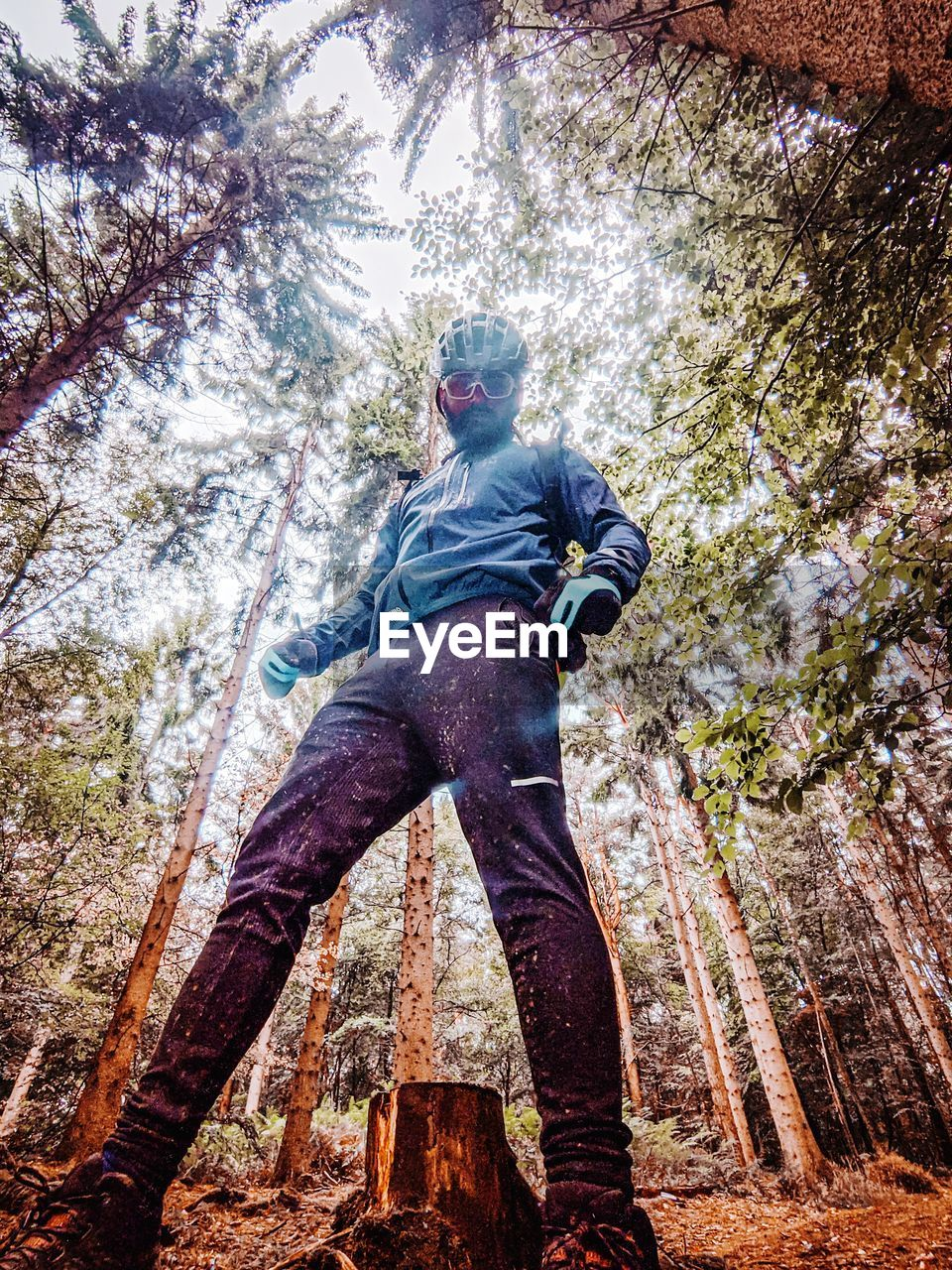 LOW ANGLE VIEW OF MAN STANDING ON TREE IN FOREST
