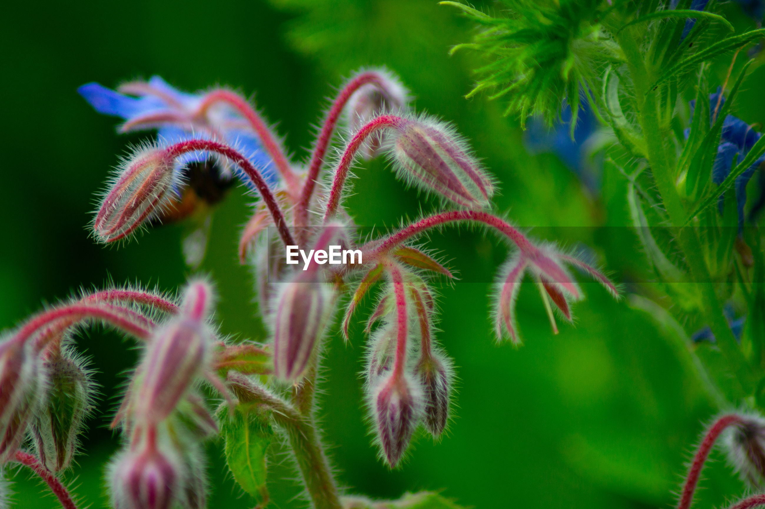 Close-up of pink blue and purple flowering plant