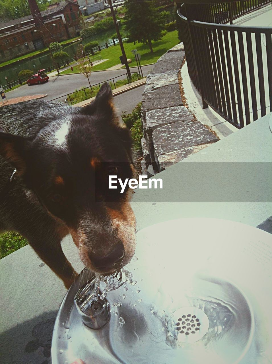 one animal, domestic animals, dog, water, animal themes, pets, mammal, close-up, day, no people, drink, outdoors, portrait, freshness