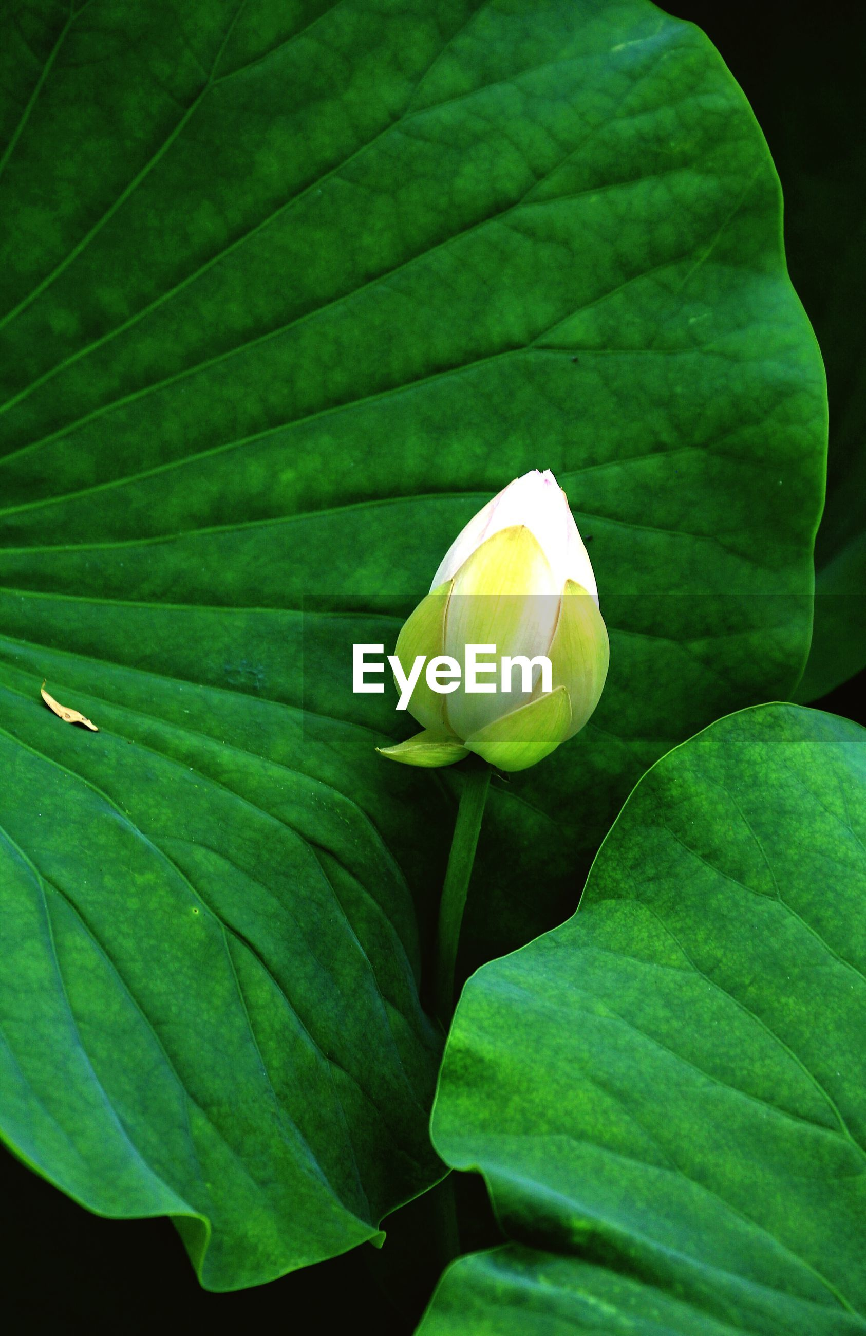 leaf, green color, freshness, growth, close-up, leaf vein, beauty in nature, nature, fragility, plant, yellow, green, flower, natural pattern, single flower, high angle view, no people, day, outdoors, bud