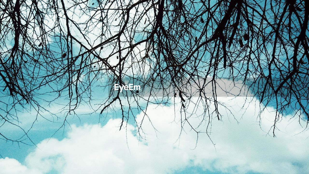 sky, nature, low angle view, beauty in nature, bare tree, no people, tranquility, branch, day, outdoors, blue, tree, close-up
