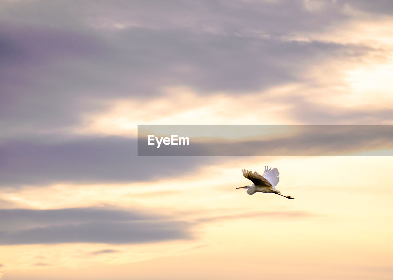 Low angle view of bird flying in sky during sunset