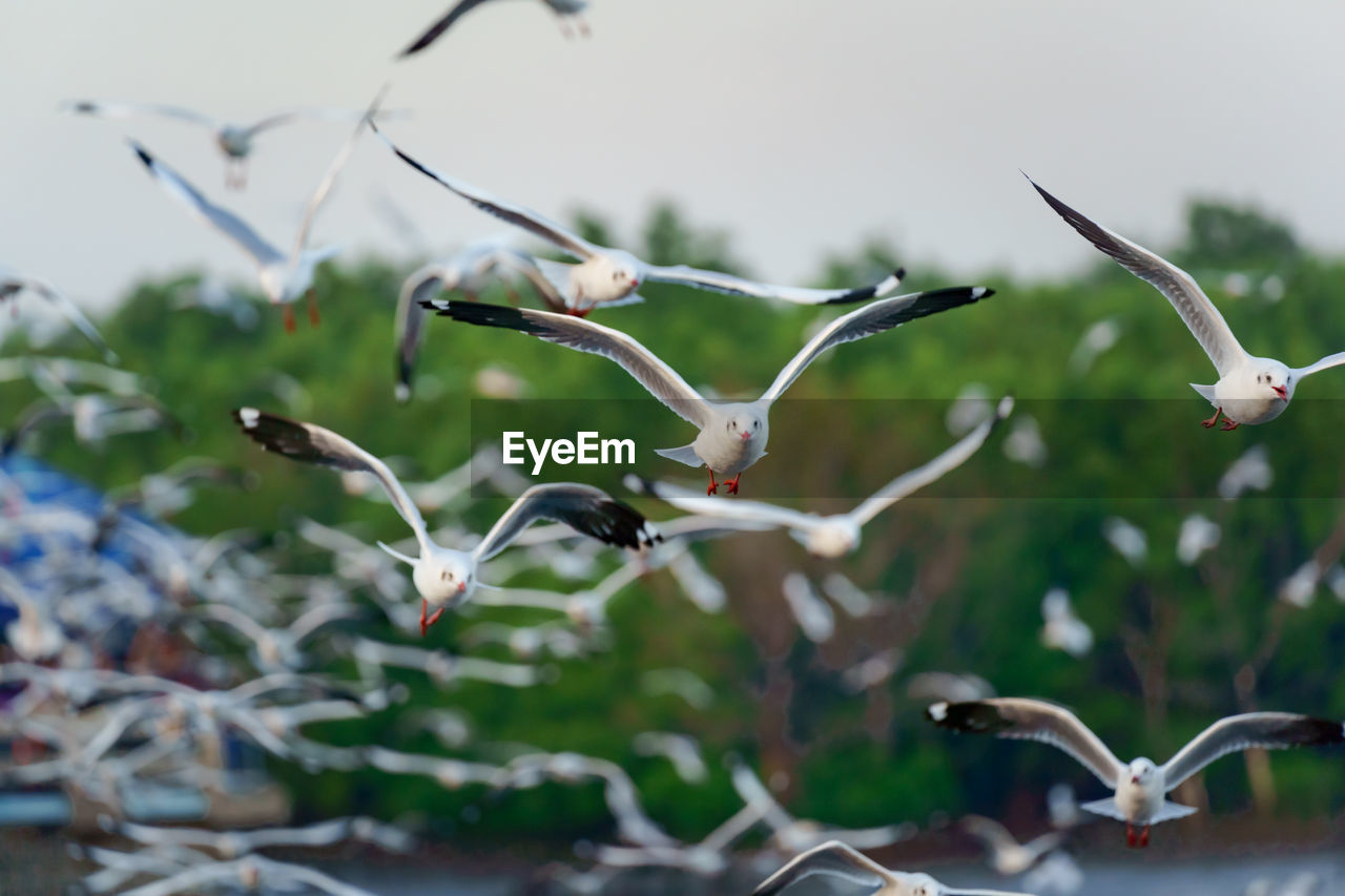 CLOSE-UP OF BIRDS FLYING IN THE BACKGROUND