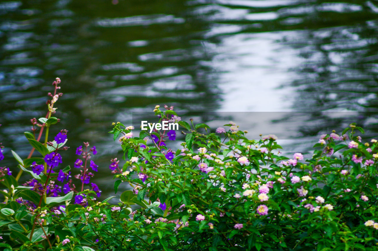 flowering plant, flower, plant, beauty in nature, freshness, growth, vulnerability, fragility, day, purple, nature, no people, focus on foreground, close-up, petal, selective focus, outdoors, flower head, green color, land, springtime