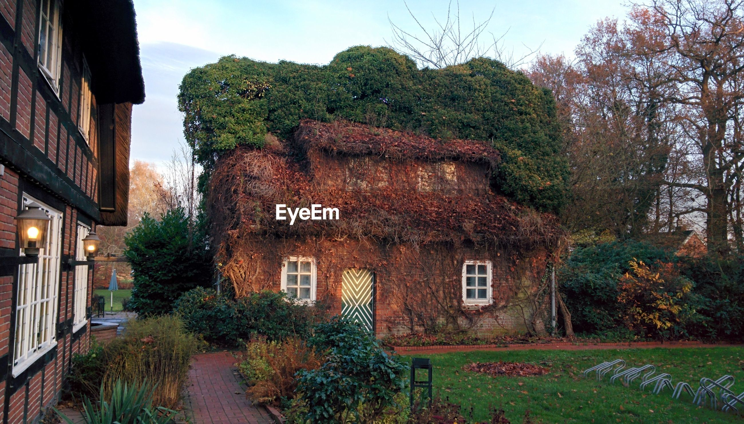 House covered with dry plants