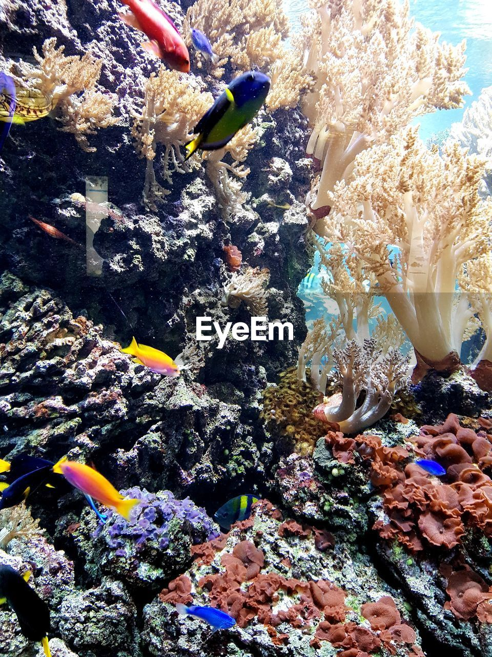 underwater, sea life, undersea, swimming, fish, animals in the wild, water, coral, animal themes, scuba diving, sea, adventure, animal wildlife, clown fish, nature, multi colored, real people, day, beauty in nature, outdoors, scuba diver, close-up