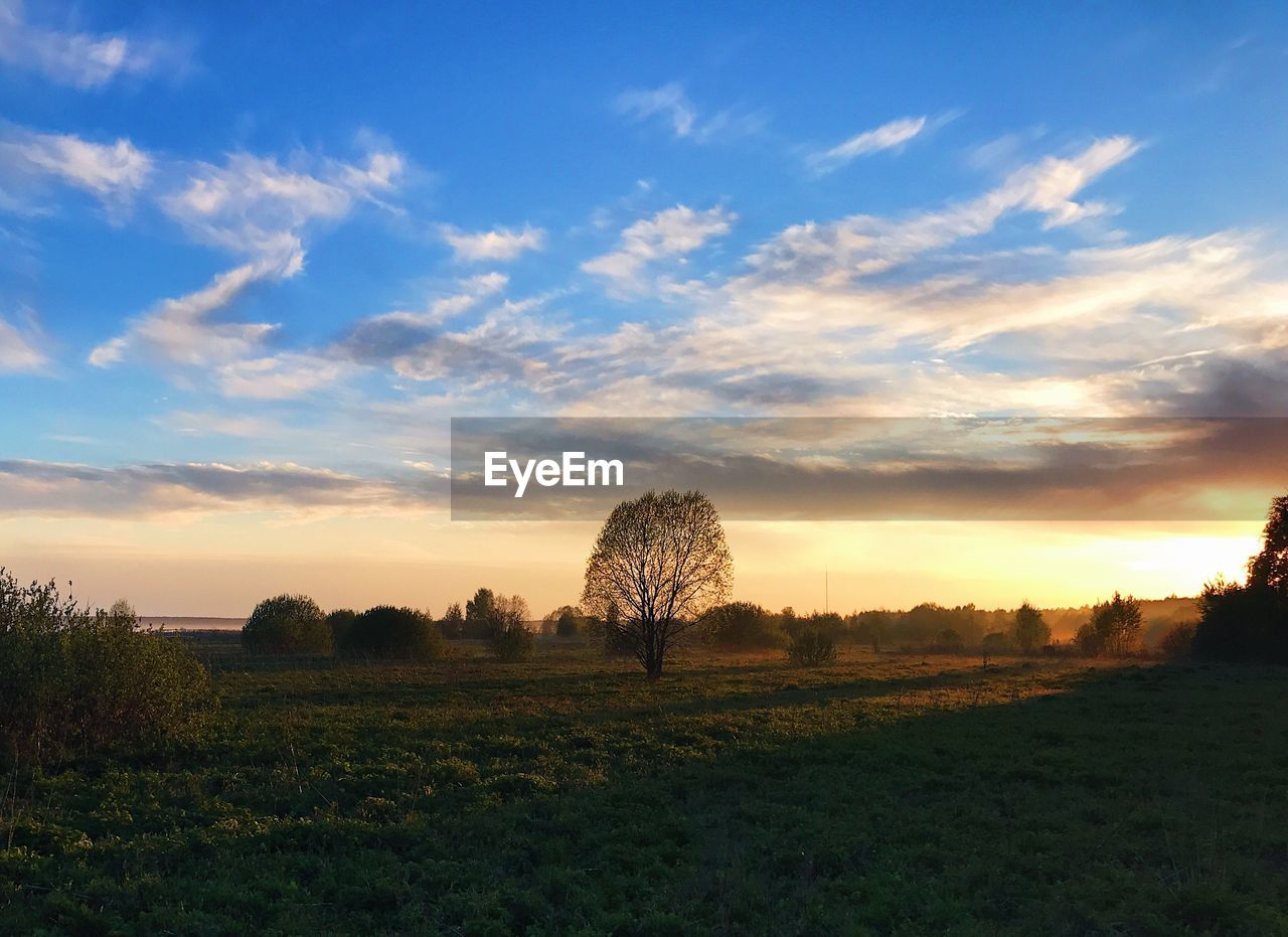 landscape, field, tree, lone, sunset, beauty in nature, tranquility, bare tree, sky, tranquil scene, nature, scenics, grass, no people, outdoors, day