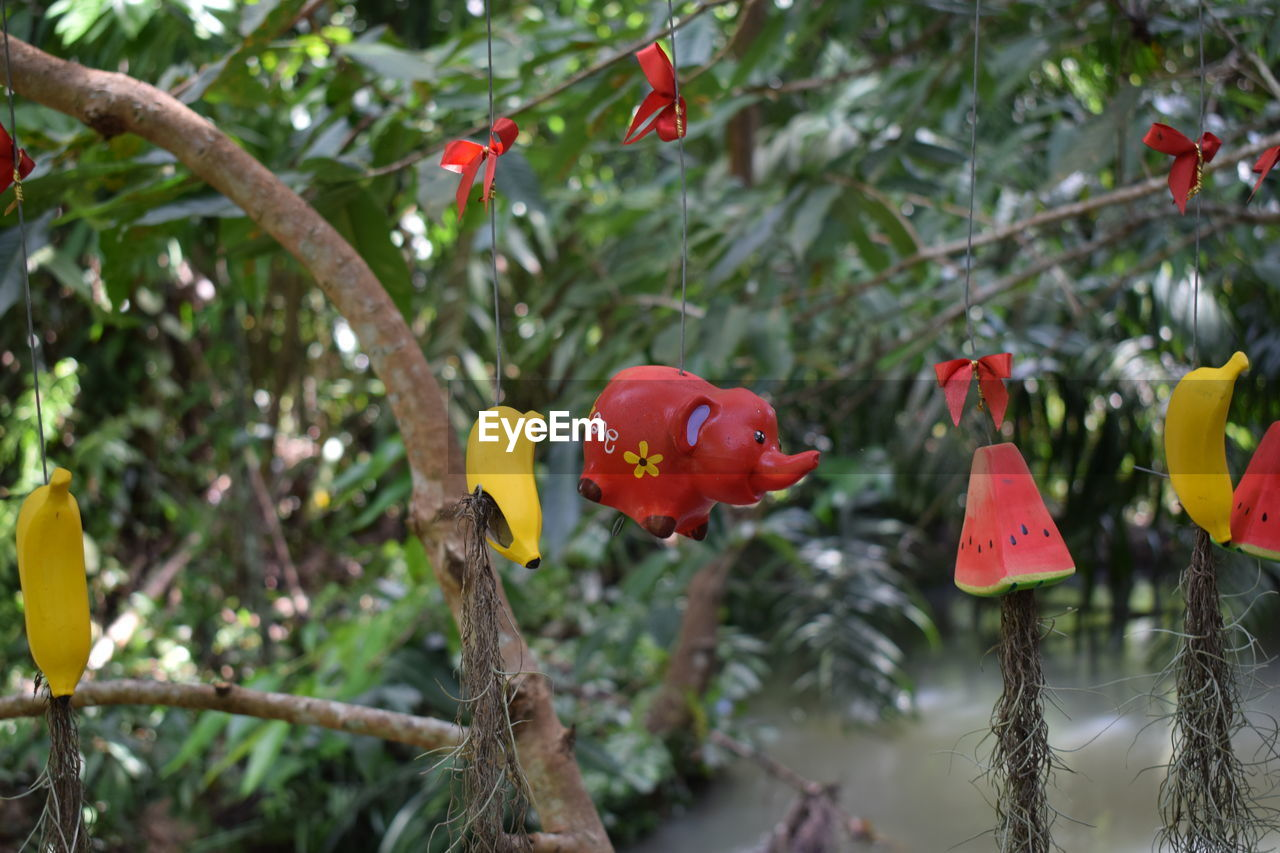 tree, plant, focus on foreground, growth, red, day, close-up, branch, no people, nature, outdoors, hanging, food, beauty in nature, selective focus, food and drink, freshness, fruit, yellow, healthy eating, ripe
