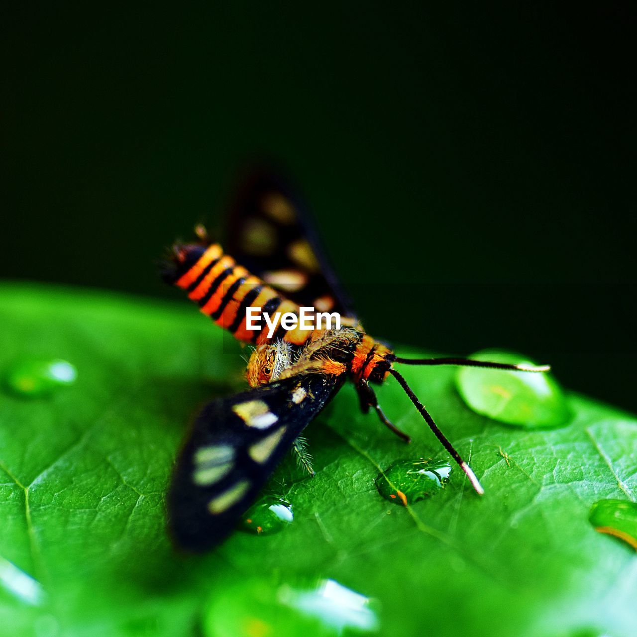 invertebrate, one animal, insect, animal wildlife, animal themes, animals in the wild, animal, plant part, leaf, green color, close-up, selective focus, no people, nature, beauty in nature, plant, day, outdoors, yellow, growth