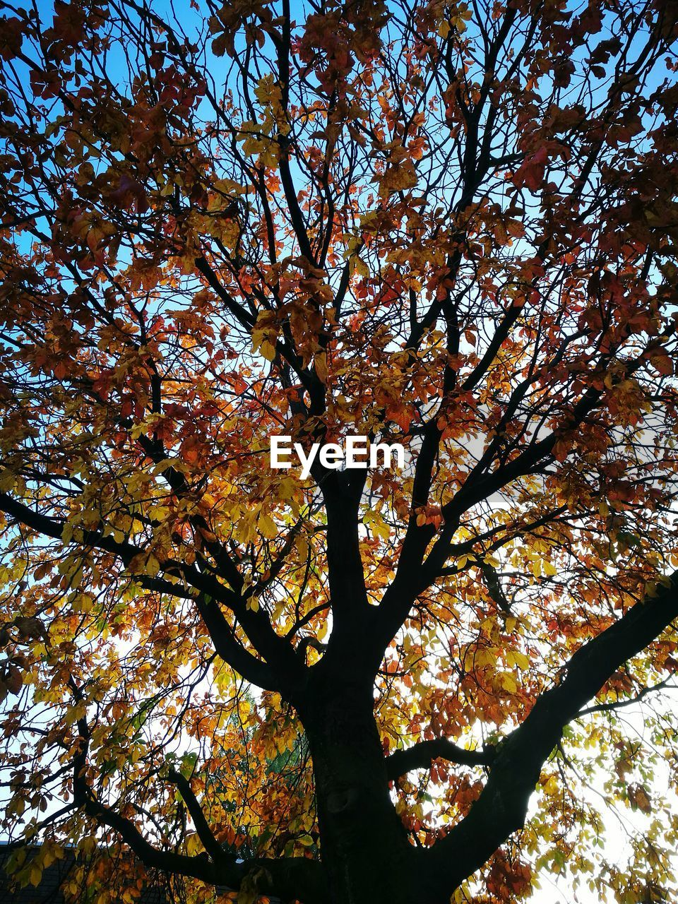 tree, low angle view, nature, autumn, branch, growth, beauty in nature, leaf, day, no people, outdoors, sky