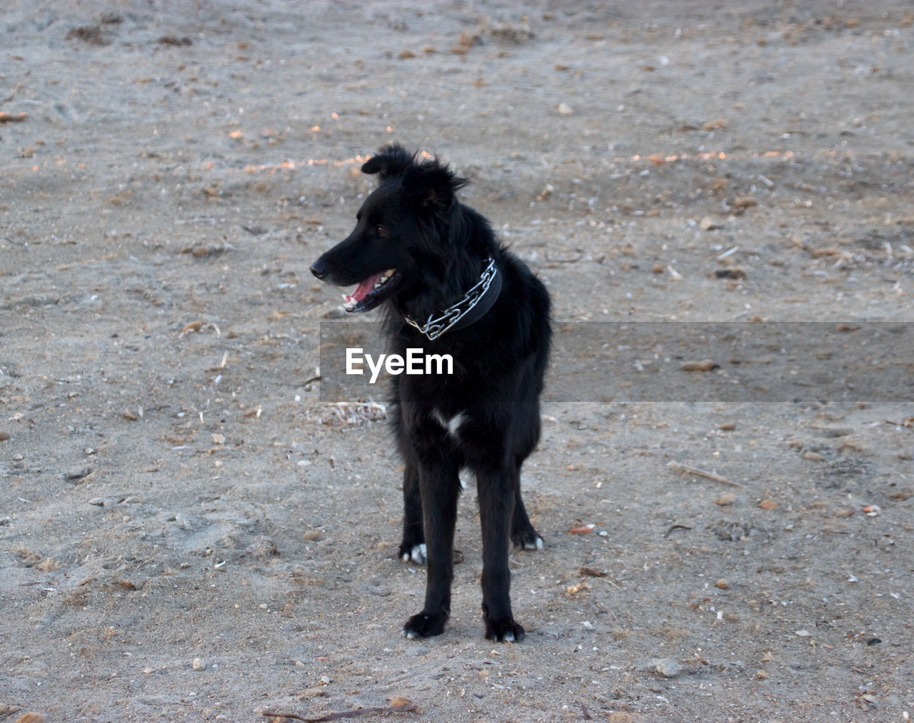 dog, black color, pets, domestic animals, one animal, animal themes, outdoors, day, no people, mammal