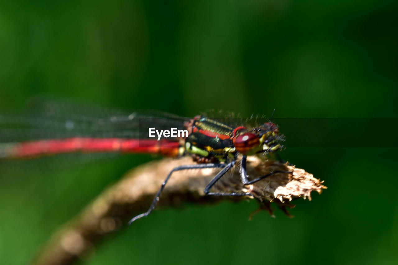 insect, invertebrate, animal wildlife, animal, animals in the wild, animal themes, one animal, close-up, green color, day, nature, selective focus, no people, plant part, plant, leaf, outdoors, animal wing, focus on foreground, zoology