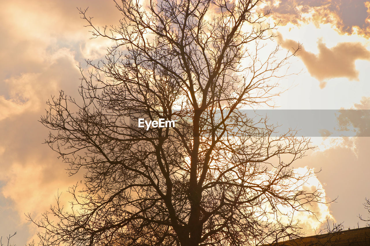 tree, bare tree, sky, branch, cloud - sky, plant, low angle view, silhouette, beauty in nature, nature, no people, tranquility, outdoors, scenics - nature, sunset, tranquil scene, idyllic, day, non-urban scene, tree trunk