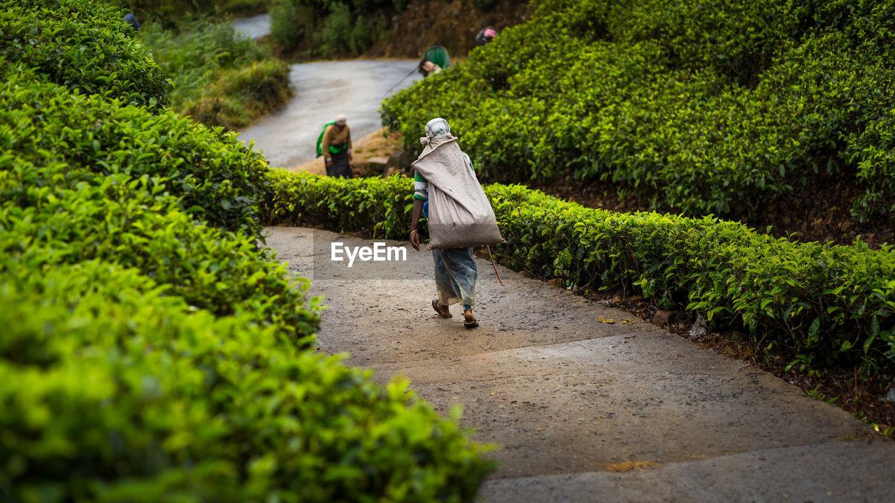 Woman Walking On Road In Sri Lanka