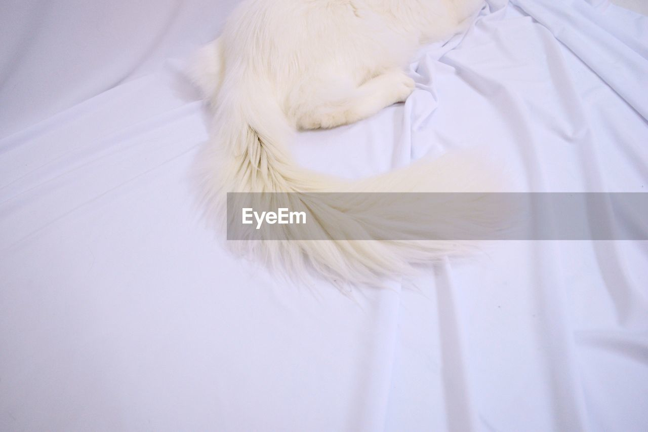 Low section of cat on bed