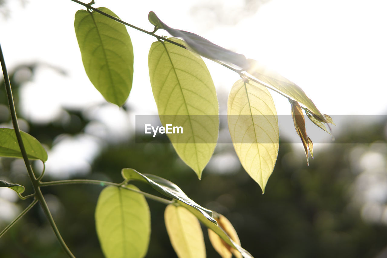 leaf, close-up, outdoors, day, focus on foreground, nature, no people, growth, green color, beauty in nature, low angle view, plant, tree, branch