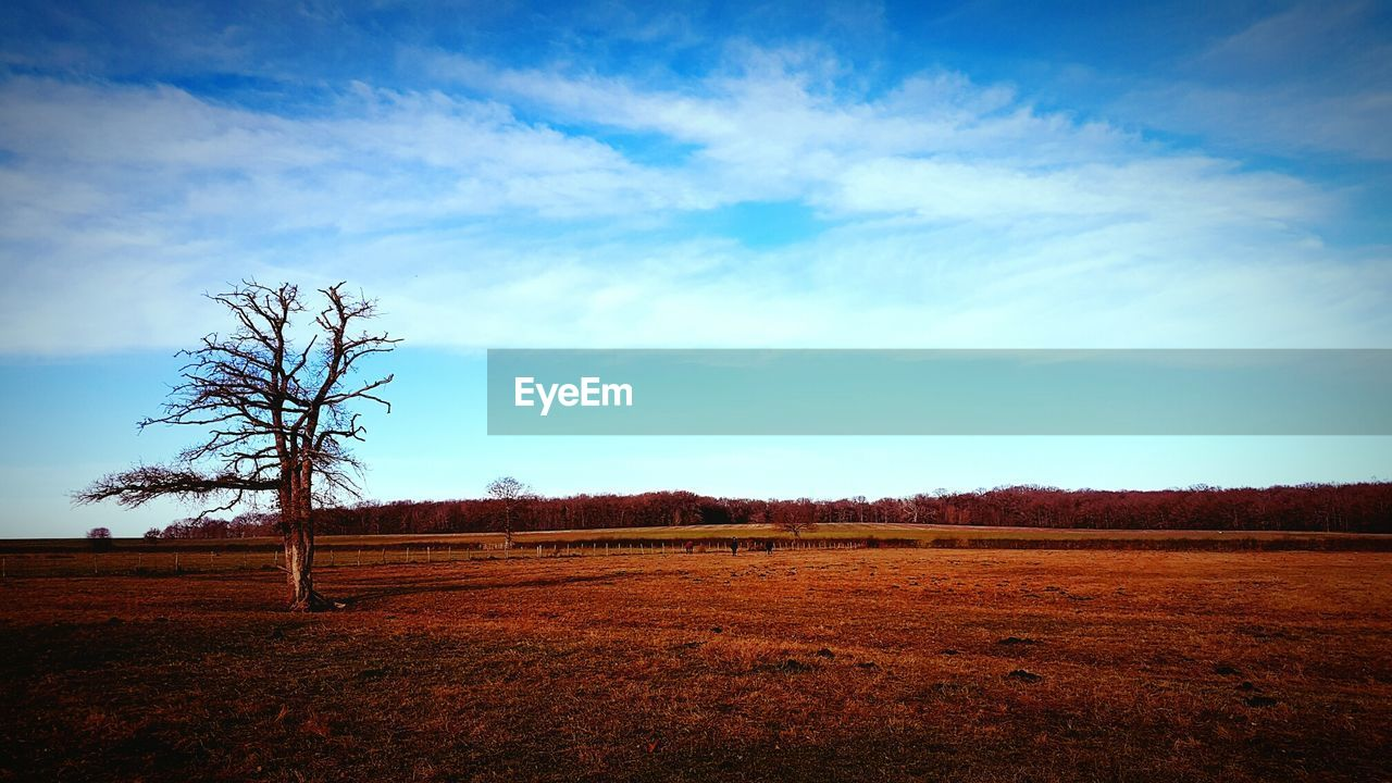 landscape, tranquility, tranquil scene, beauty in nature, tree, blue, field, nature, scenics, sky, day, no people, outdoors, bare tree, lone