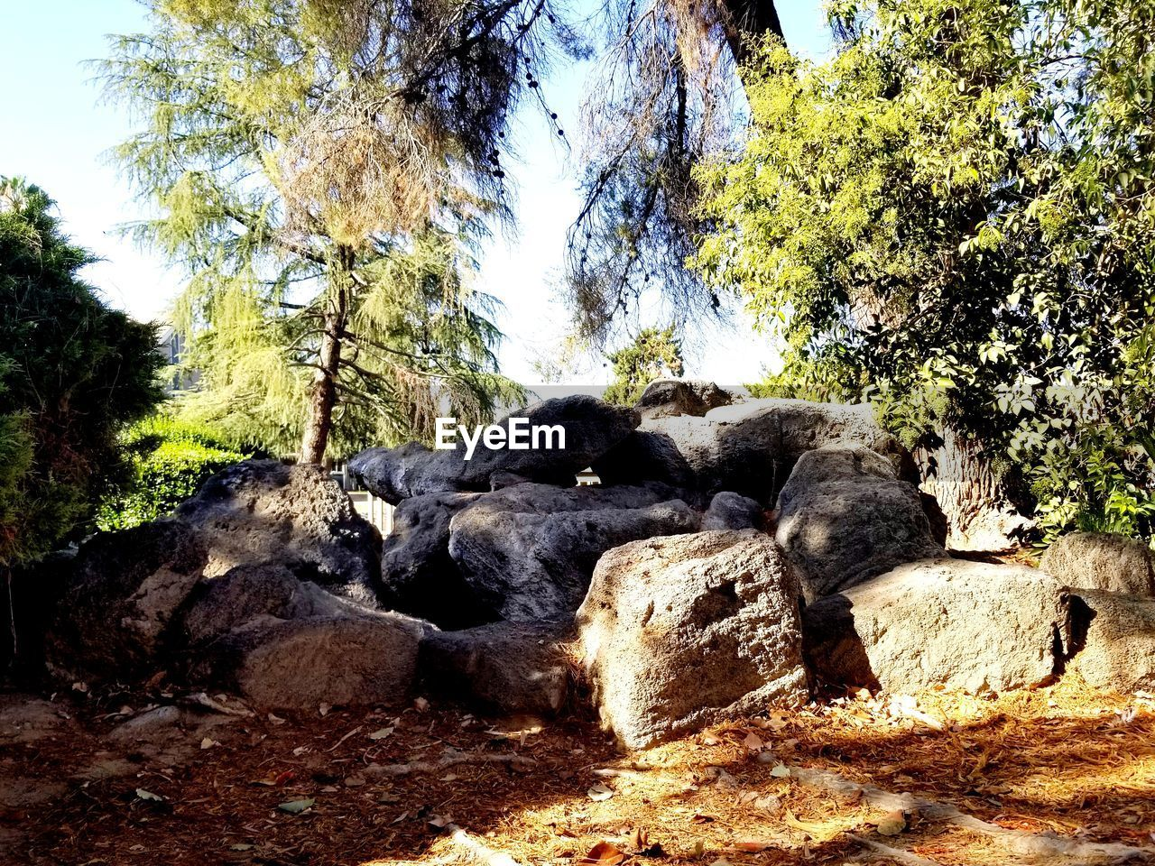 tree, rock, plant, solid, rock - object, nature, no people, day, land, tranquility, forest, beauty in nature, sunlight, growth, non-urban scene, scenics - nature, rock formation, outdoors, tranquil scene, low angle view
