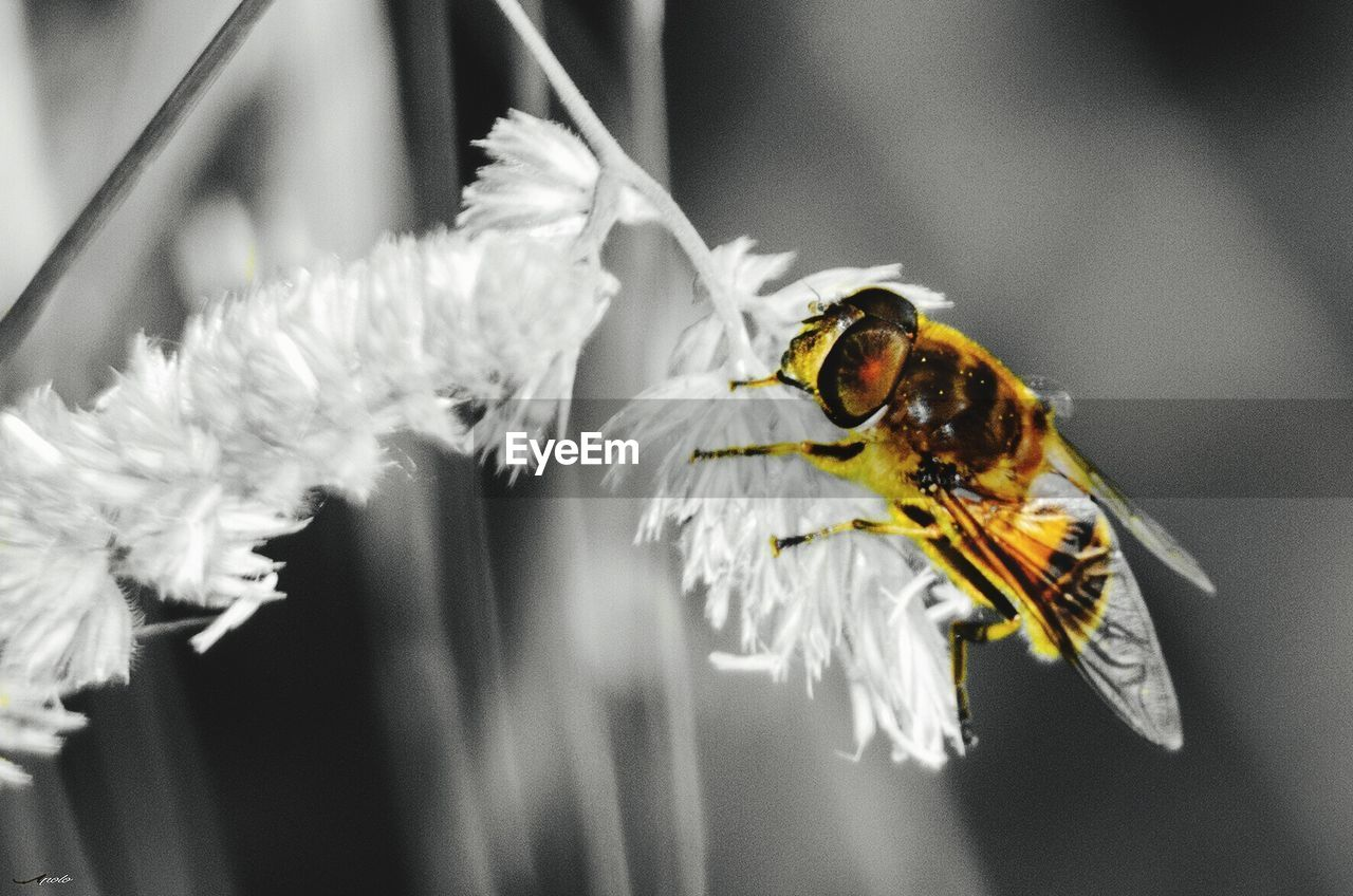 animals in the wild, animal wildlife, animal themes, insect, animal, invertebrate, flowering plant, focus on foreground, one animal, close-up, flower, plant, beauty in nature, no people, vulnerability, fragility, petal, pollination, bee, nature, flower head, pollen, outdoors
