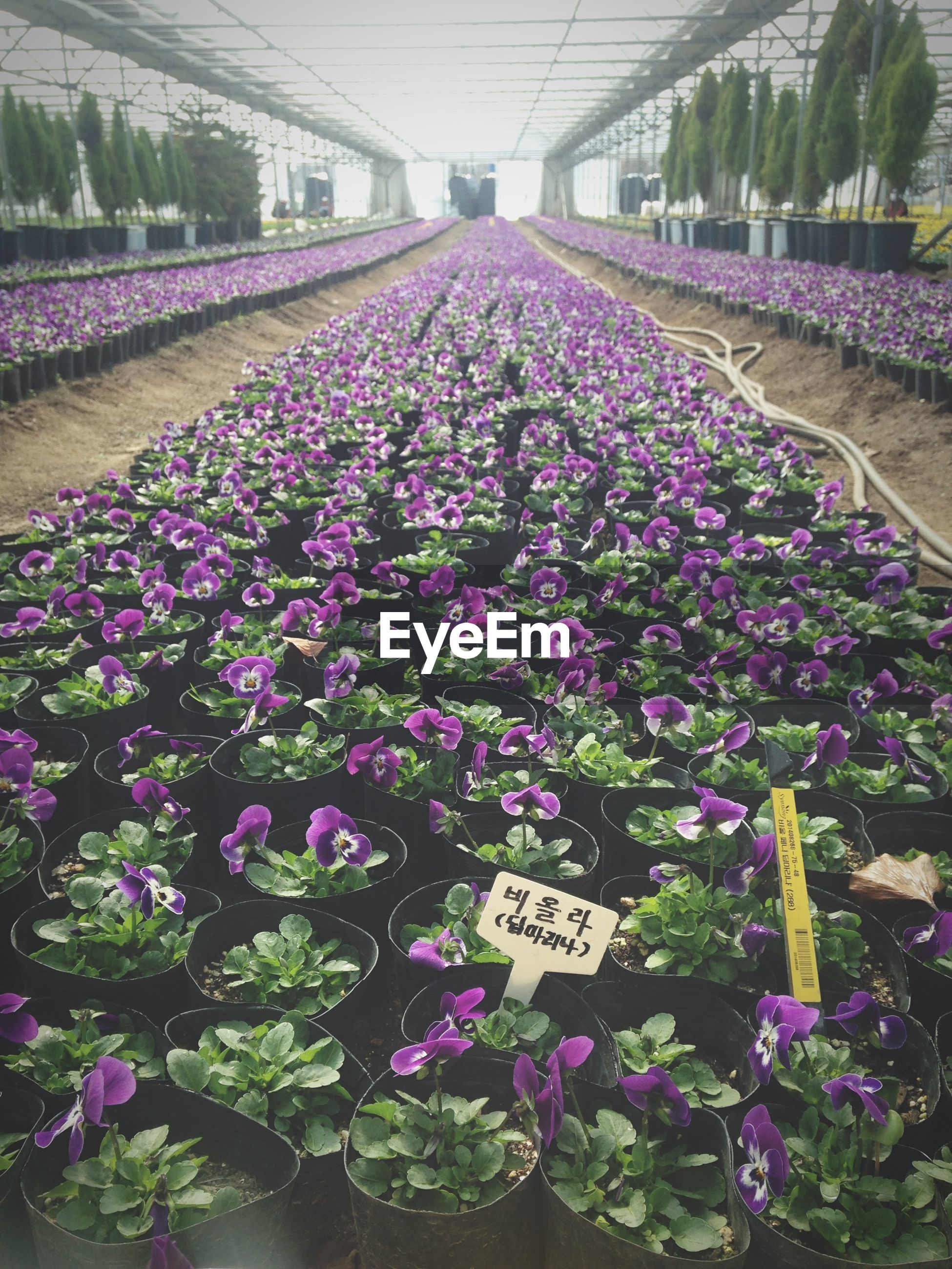 flower, freshness, plant, growth, abundance, fragility, beauty in nature, nature, blooming, transportation, purple, high angle view, day, outdoors, variation, flowerbed, multi colored, pink color, in bloom, no people