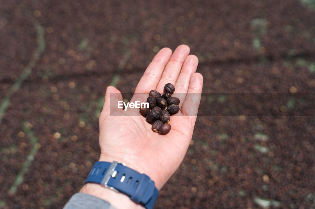 HIGH ANGLE VIEW OF MAN HAND HOLDING FRUIT