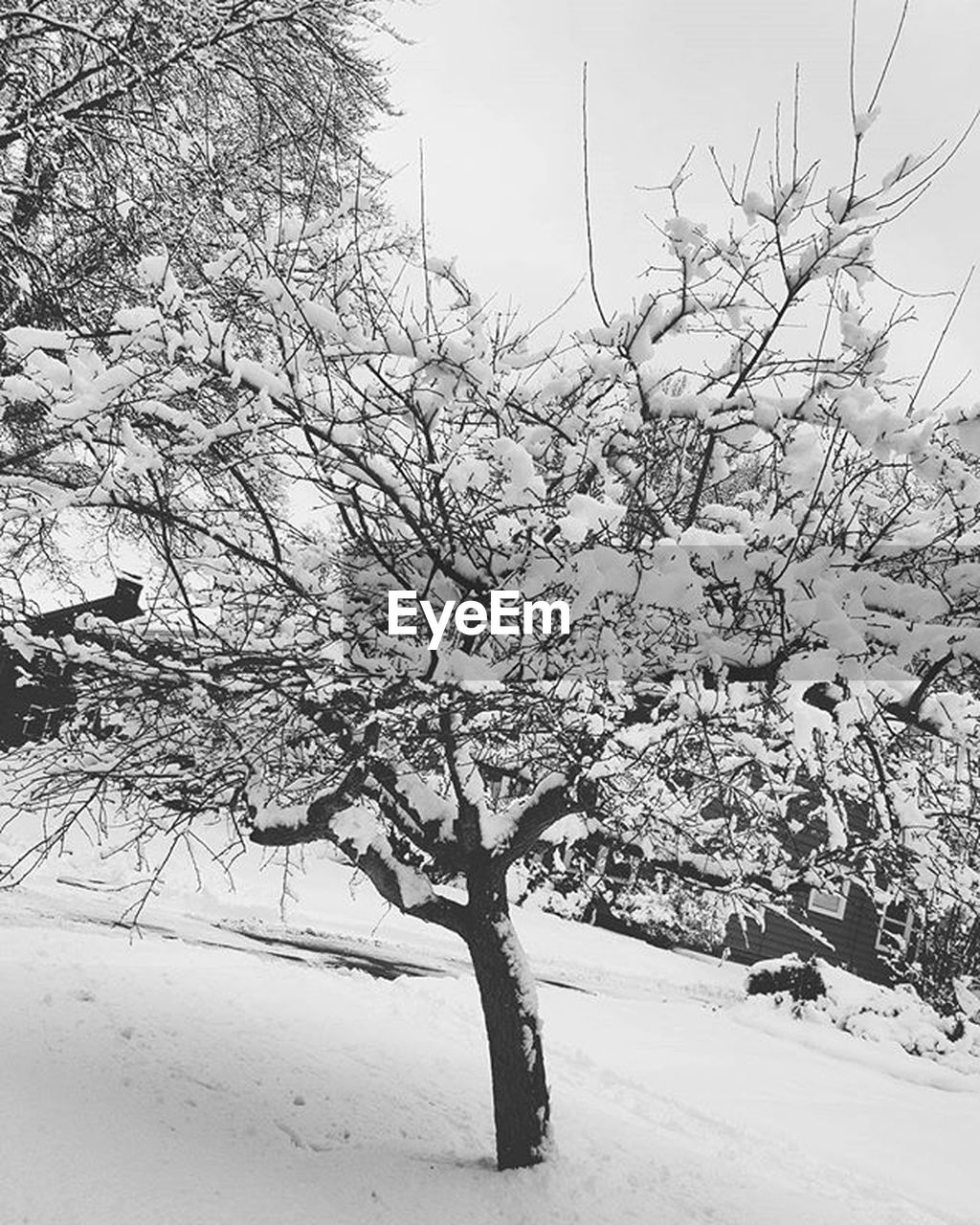 snow, winter, cold temperature, tree, nature, beauty in nature, branch, weather, no people, tranquility, bare tree, outdoors, day, sky, scenics, freshness