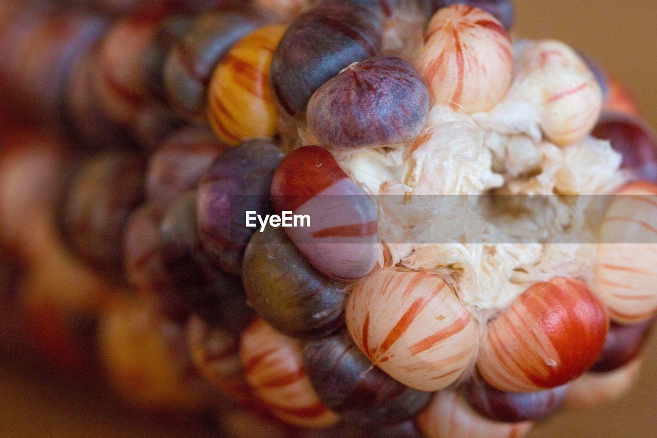 Detail Shot Of Corn