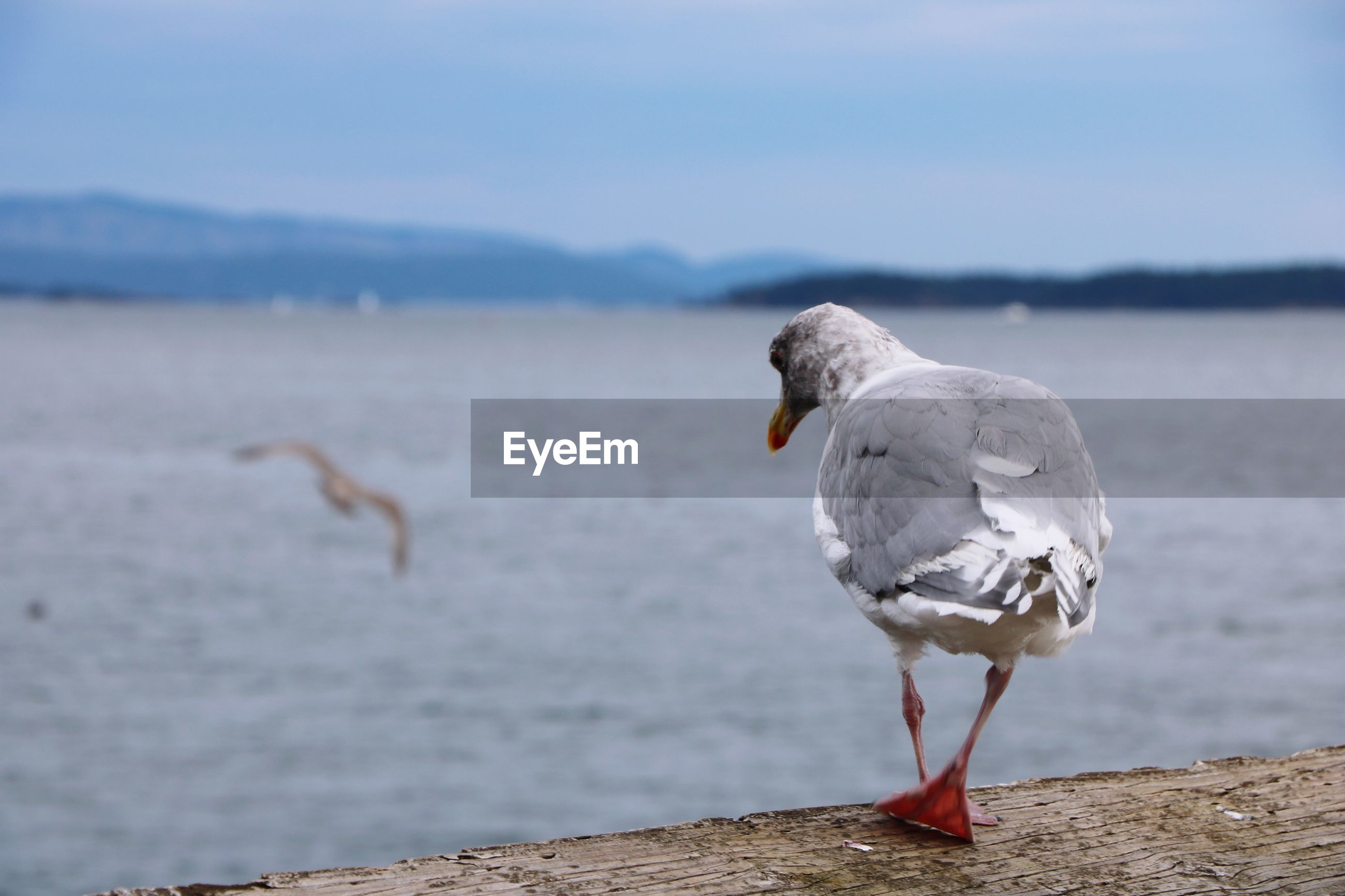 Close-up of seagull perching on beach